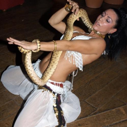 Arabian Snakes