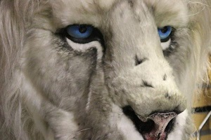 Hire a Snow Lion live entertainment puppet and keeper for your event now!